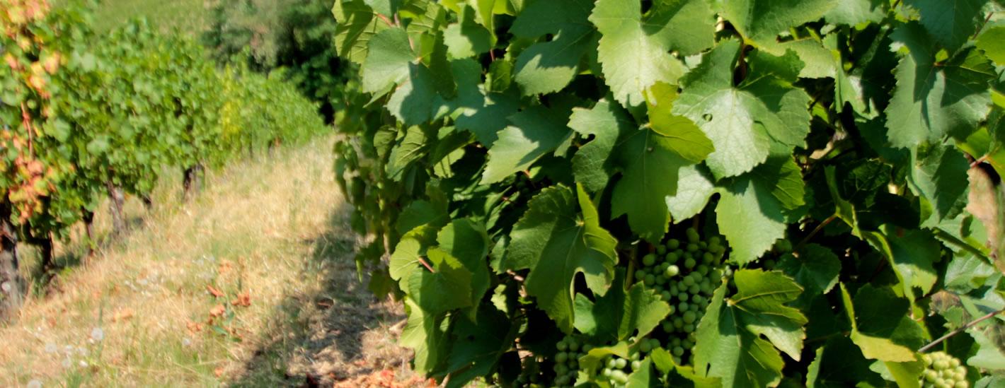 vigneti biologici borgo priolo percivalle vini